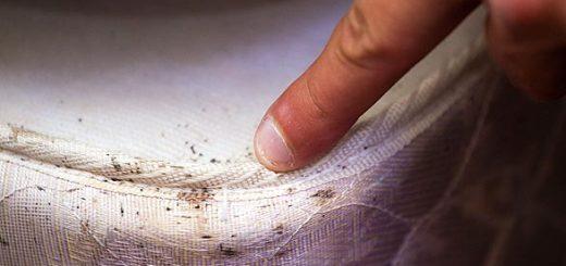 клопы постельные как вевести насекомых