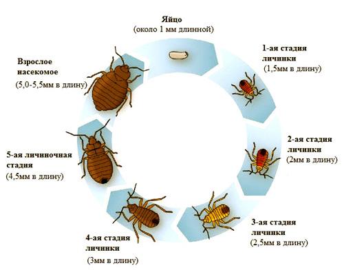 паразиты в человеке