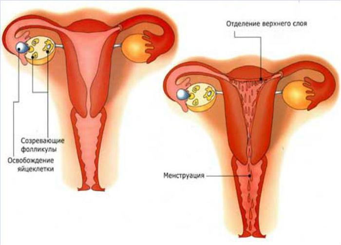 Идут месячные а симптомы как у беременной