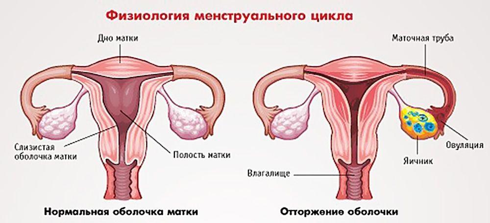 Что представляет собой нерегулярный менструальный цикл