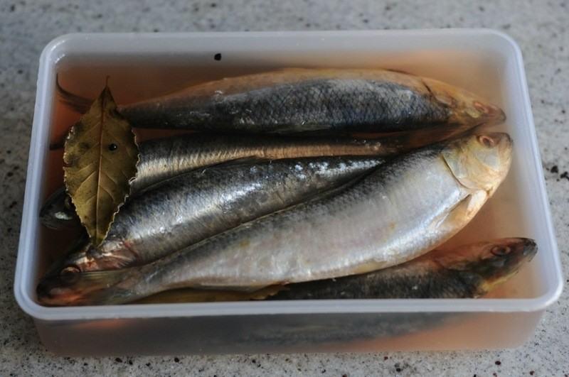 Засолка рыбы в домашних условиях в масле