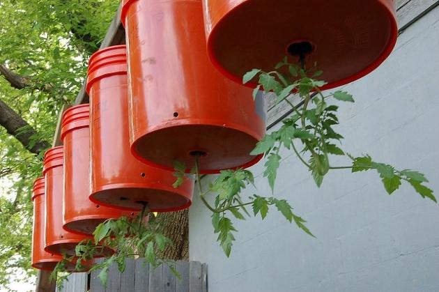 помидоры на балконе выращивание пошагово