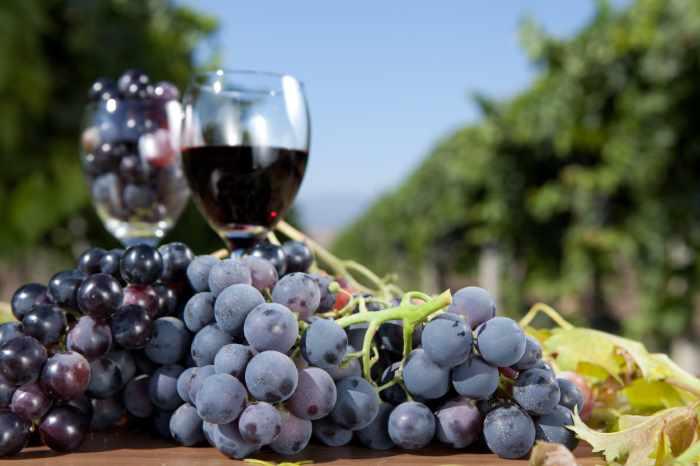 Как приготовить вино в домашних условиях. Молдавский рецепт