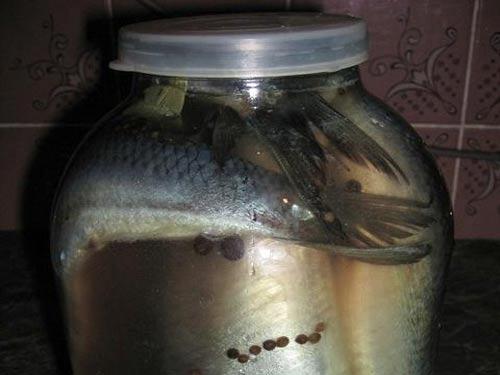 Рецепт засолки сельди в домашних условиях целиком
