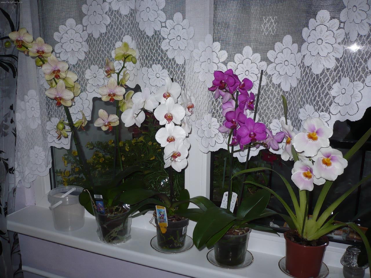Все про орхидеи в домашних условиях