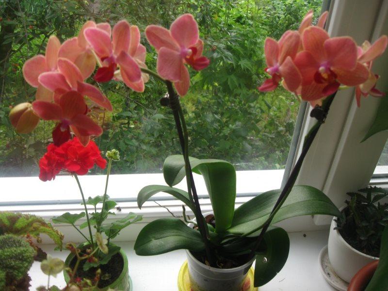 Как вырастить орхидею в домашних условиях виды орхидей