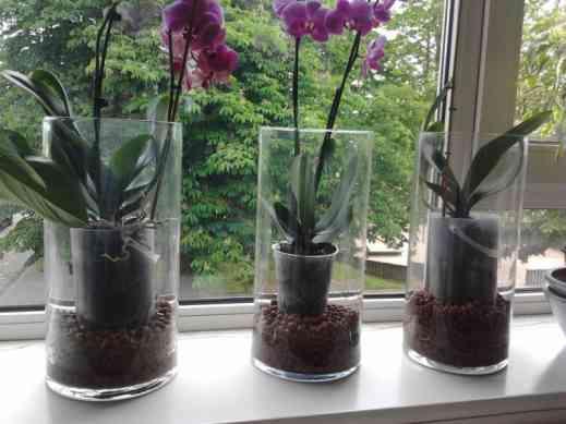 Как вырастить орхидеи с