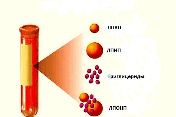 какая норма холестерина в крови человека