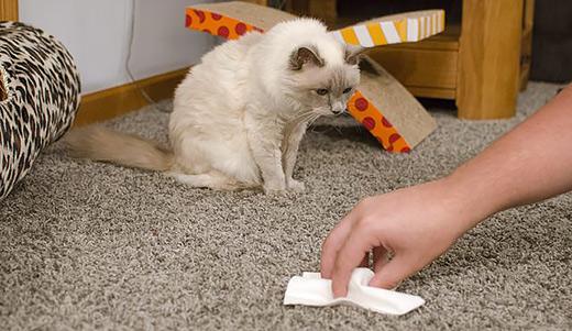 Чем избавиться от запаха собачьей мочи на ковре в домашних условиях