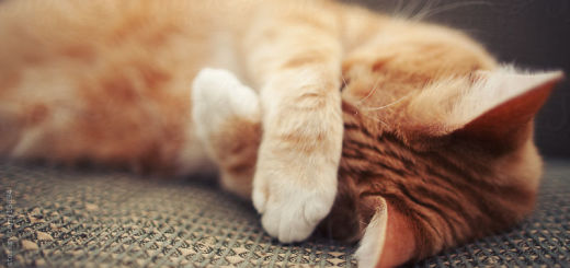 как избавиться от запаха кошачьей мочи на диване в домашних условиях